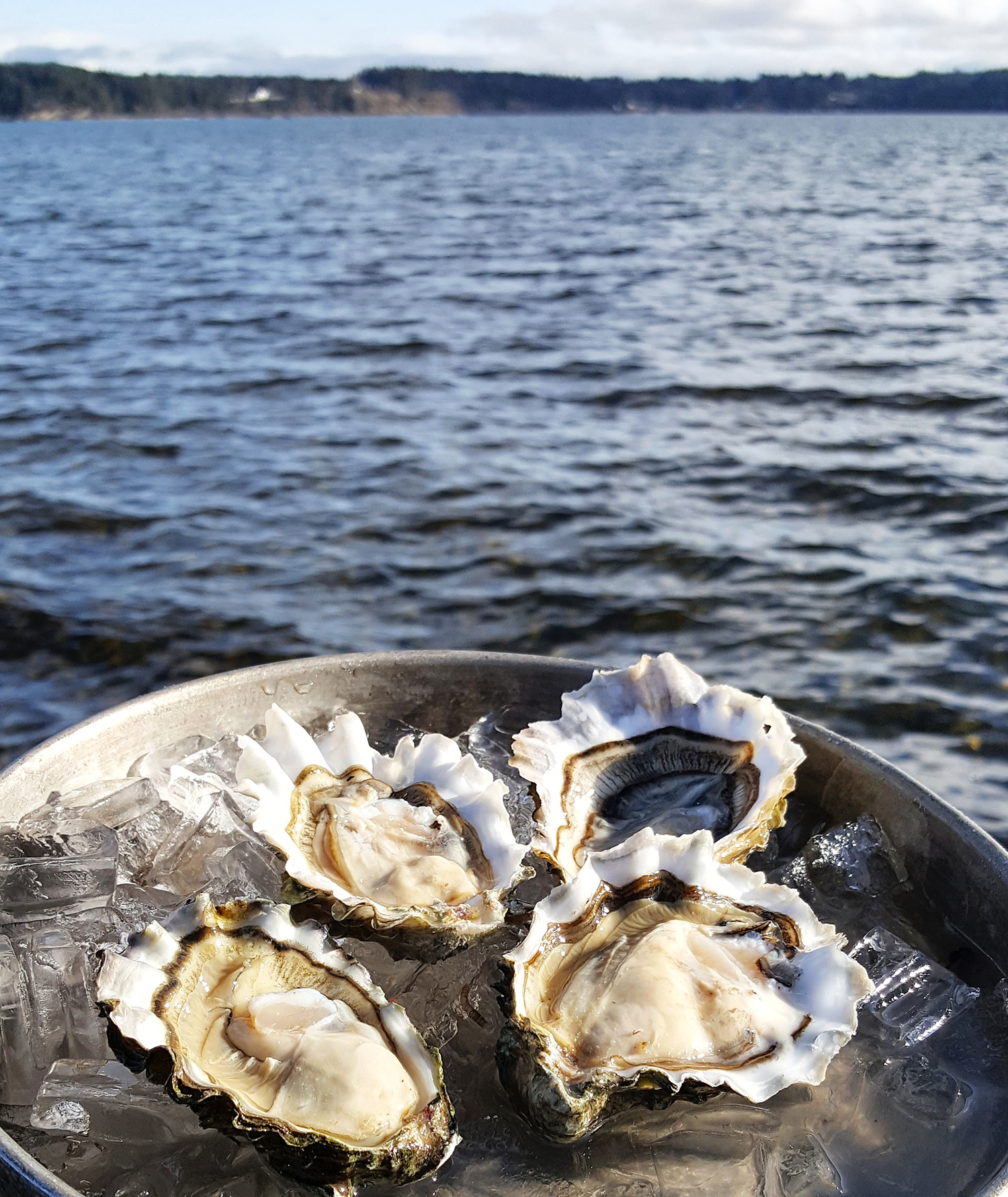 w-shucked oysters 2